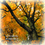 autumn tree photo