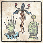 The Hand of Mandragora